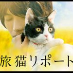「旅猫リポート」が観れる動画配信サイト一覧